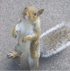 Squirrel_Standing