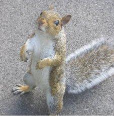 Squirrel_Standing